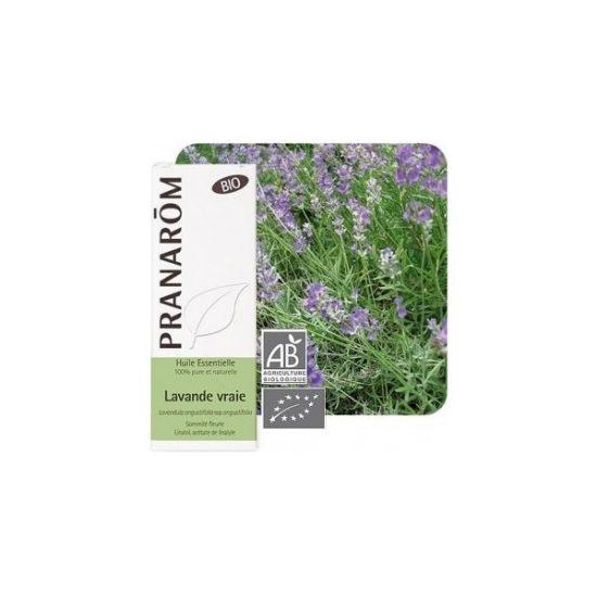óleo essencial de sumidade florida lavandula angustifolia ssp angustifolia