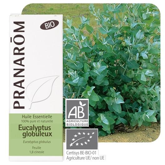óleo essencial da folha de eucalyptus globulus