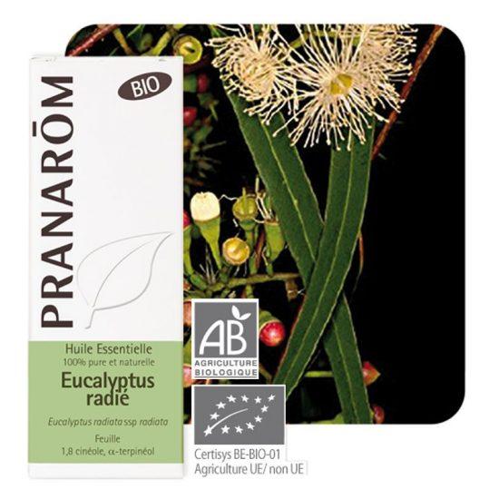 óleo essencial da folha de eucalyptus radiata ssp radiata